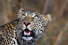 5 Days Tanzania Camping Safari