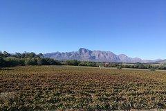 Cape Town Wine lands Wine Tasting