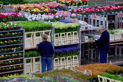Flower Auction & Kinderdijk - Small Public Group Tour from Amsterdam