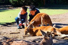 Caversham Wildlife Park, Old Guildford Town & Swan Valley (Private)Tour