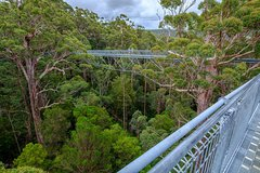 Imagen Valley of the Giants and Tree Top Walk Day Tour from Perth