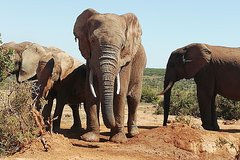 Addo Elephant Park and Kragga Kamma Wildlife Reserve combo Day Visit-