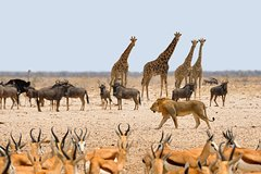 Namibia Express Safari - 6 Days
