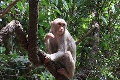 Monkey Forest and Hotai Pidok Tour