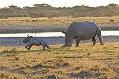 2 nights Rhino Safari in Central Botswana