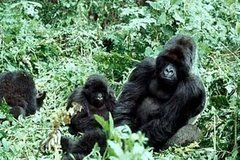 3 days gorilla trekking Bwindi safari