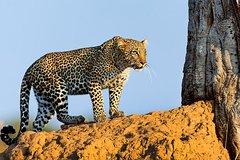 10-Day Wildlife Adventure -Samburu -Nakuru- Maasai Mara- Amboseli