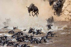 7 Days The Great Migration