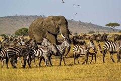 1 Day Safari - Tarangire National Park-