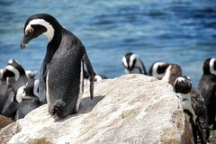 Cape Peninsula and Table Mountain Private Day Tour - Parks Tickets Included