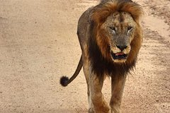 4 Day All Incl- Private Kruger Park Safari and Transfer From Nelspruit