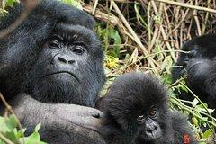 3 Days Gorilla Experience Uganda