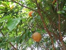 Agro-ecological tropical garden