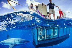 Imagen Great White Shark Cruise with Optional Cage Dive and Aqua Sub from Port Lincoln