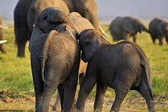 10 Days Wild Safari