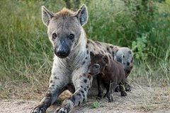 2 Days Camping Safari Tour Tanzania