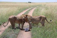 6 Days Budget Mid Range Safari Tour Tanzania