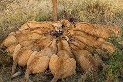 5 Days Budget Mid Range Safari Tour Tanzania