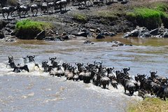 3 Days Northern Safari - Manyara Ngorongoro Crater and Tarangire National Parks
