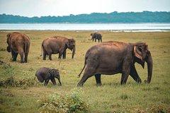 Afternoon Safari to Kaudulla National Park