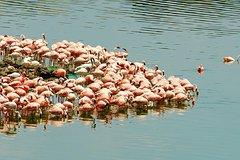 4 Days Lake Manyara National Park