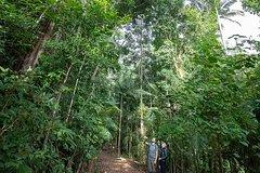 Imagen Rainforests & Waterfalls