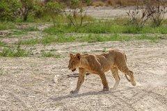 12 Days  11 Nights Safari in South Tanzania
