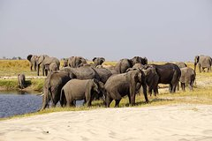 Chobe Extended Day Trip: From Victoria Falls