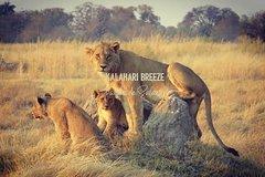 8 Day Okavango Safari - Wilderness Trail (Inner Delta & Moremi)