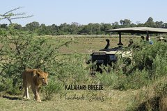 1 Day Moremi Game Drive Safari, guided