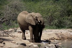 A Full Day Safari Tour to the Hluhluwe Imfolozi Big 5 Game Reserve