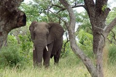 4 Day Kruger Private family Tour 7pax