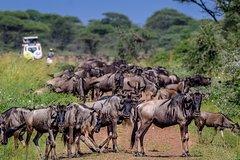 4 Days luxury SerengetiNgorongoro and Lake Manyara National Park