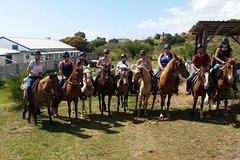 Imagen St Kitts Rainforest Horseback Riding Tour