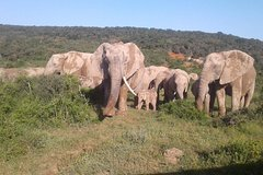 Addo Elephant National Park Game Drives