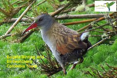 Birdwatching Nature and photography in Sumapaz National Park