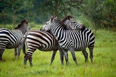 2 Days Lake Mburo National Park (Private)