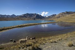 CONDORIRI Mountain Range and Lagoons Full day Trekking. Spanish guide.