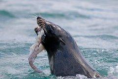 Dunedin Wildlife Cruise and Portobello Village-Cruise Ship Passenger-Half Day