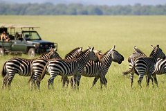 3days Maasai Mara Safari Joining a group