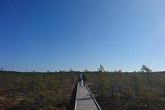 Go North – Private 1 Day Trip to Estonian Nature