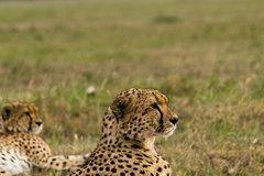 7 Days Amboseli National park and Maasai Mara Safari