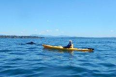 Whale Watching by Sea Kayak in Batemans Bay