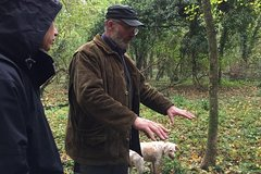 Florence: Truffle hunting with Lunch de-luxe: the ultimate Tuscan experienc