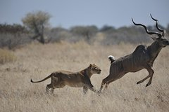 Chobe NP, Victoria falls and Hwange NP Luxury Safari