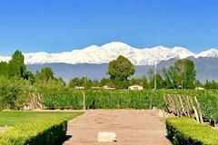 Half Day Private WineTour Lujan de Cuyo