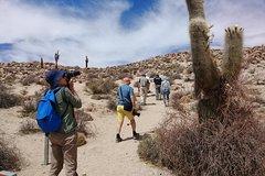 Imagen Recorrido de 2 día por Las Pailas, Los Colorados y La Poma desde Cachi