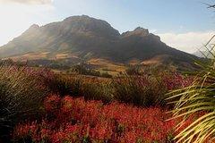 Cape Winelands Stellenbosch Morning Tour