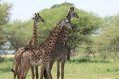 3 Day Serengeti Ngorongoro Safari