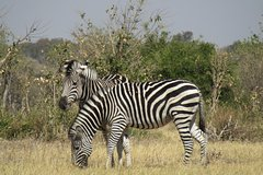 Chobe Day Trip from Livingstone with Lunch